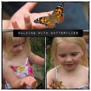 walking with butterflies