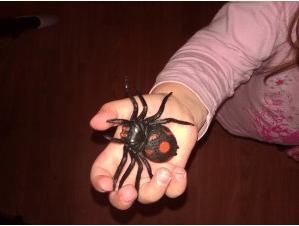 Spider Rhyme