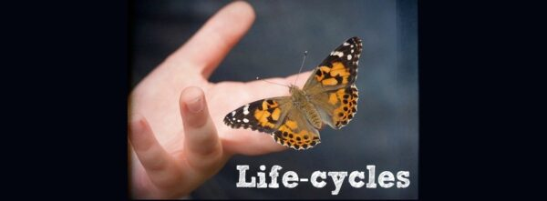 The Sunday Showcase – Life-cycles