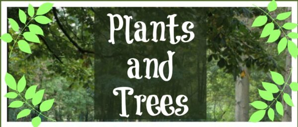 The Sunday Showcase: Plants and Trees