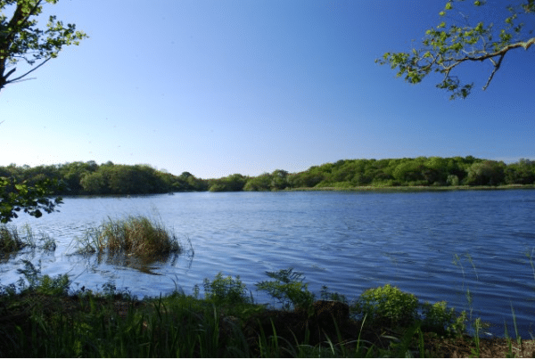 What Can Celebrities Do on the Norfolk Broads?