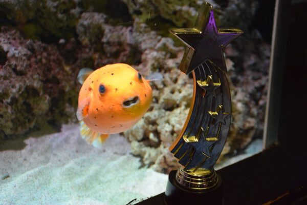 Golden Puffer Fish named %27Adam Peaty%27 at The National Sea Life Centre Birmingham