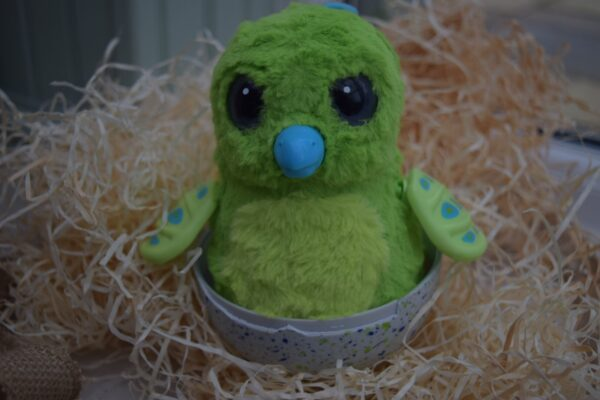Our Hatchimals Egg had Hatched!