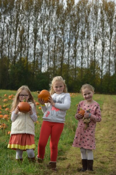 pumpkins-at-hatton-2016